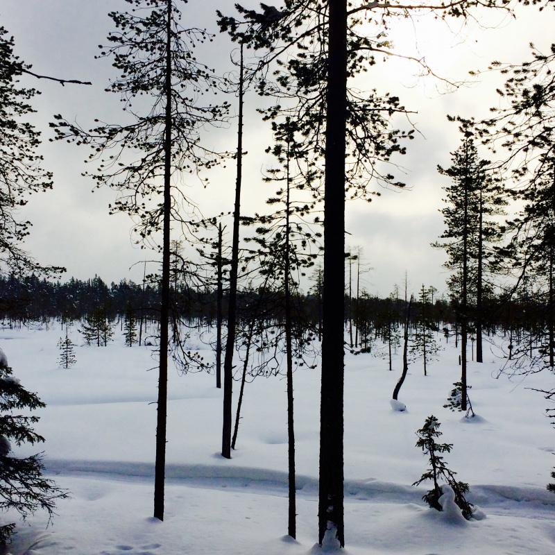 Erfahrungsbericht auslandssemester estland wanderlust for Innenarchitektur studium ausland